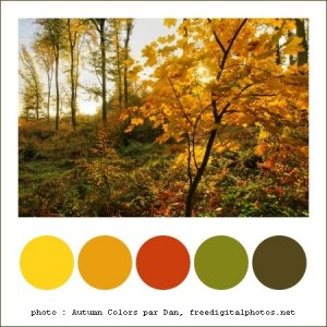 101101_ColorComboAutomne